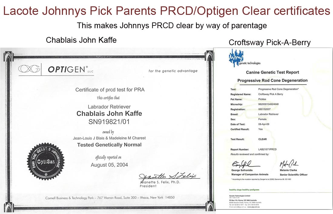 JOHNNY PRCD CLEAR BY PARENTAGE