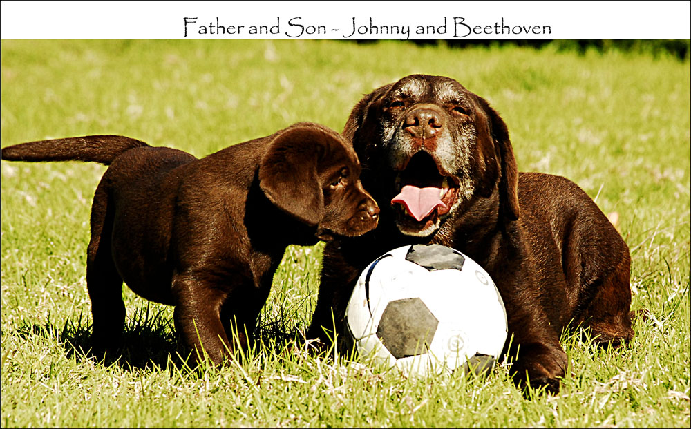 Beethoven_and_Dad_Johnny_9_wks